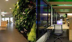 green office - Google-Suche