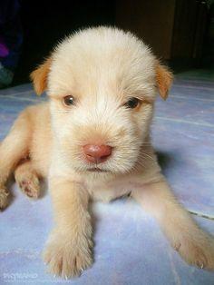#A cute puppy    Like,repin,share!