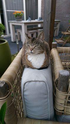 Smug loaf in the garden