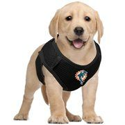 on sale be3db 4833f miami dolphins dog jersey