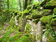 Stone wall in Galicia along the Camino de Santiago de Compostela in Spain