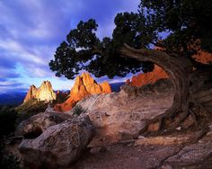 Photo @ladzinski / South Gateway Rock framed by a juniper tree and illuminated at sunrise in the #gardenOfTheGods city park in #ColoradoSprings Colorado. The park was donated to the city in 1909 by the Perkins family with the stipulation that it always be free to visitors. It's one of the more visited places in the state and to me one of the most beautiful. by natgeo