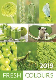 Nástěnný kalendář FRESH COLOURS 2019 12 Month Calendar, Photo Calendar, Calendar 2018, Colours, Fresh, Pdf, Wall