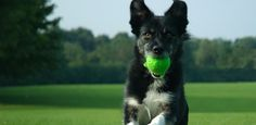 How to Training Your Dog : Dog Run Training