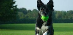 How to Training Your Dog : Dog Run Training