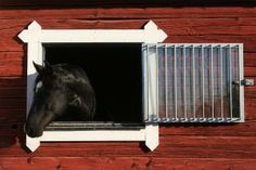 Keep the Air in Your Horse's Stable Healthy: Windows that open can aid ventilation in good weather.