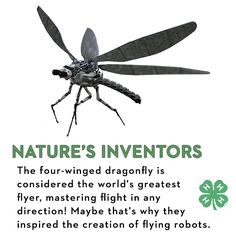 The four-winged dragonfly is considered the world's greatest flyer, mastering flight in any direction! Maybe that's why they inspired the creation of flying robots.