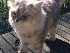 Leer je kat beter te aaien. Het heet TTouch en is superleuk om te doen. Lees er meer over in dit blog.