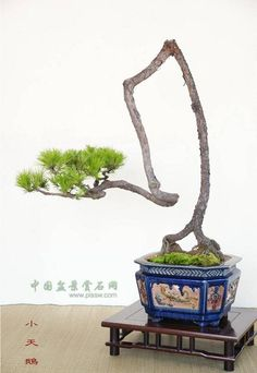 Fun And Eco-Helpful Solutions To Remodel Your Yard I Really Love The Look Of Bonsai Trees. If you don't mind Check Out My Website Thanks. Bonsai Ficus, Indoor Bonsai, Bonsai Seeds, Bonsai Plants, Mini Bonsai, Garden Terrarium, Bonsai Garden, Plantas Bonsai, Bonsai Styles