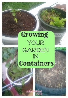 How to Grow a Garden in Containers | The Homesteading Hippy | #prepbloggers #garden