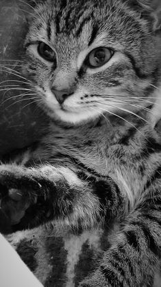 Sweet cat <3