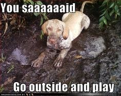 Funny Dog Pics - teddybear64 Photo