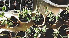 The role of a school garden across the curriculum