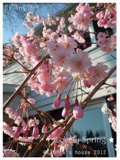 Lovely Spring.
