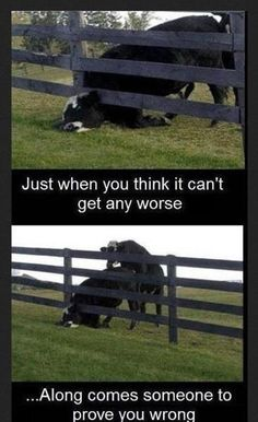 How rude...I feel sorry for this cow.