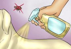 Spray your dog's coat to repel fleas. If your dog spends a lot of time romping around during the summer, using ACV may keep fleas away. Mix two cups of water and two cups of ACV in a clean spray bottle. Once a week, spray your dog's fur with the mixture. Dog Flea Remedies, Home Remedies For Fleas, Flea Remedy For Dogs, Flea In House, Flea Spray For House, Insecticide, Dog Steps, Flea Treatment, Dog Coats