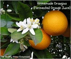 Orange Blossom - Orange Blossoms, the flowers of orange fruit trees, are attractive and inticingly aromatic. If you've ever been to Florida on a beautiful Spring day, you'll be reminded of the scent when you smell our Orange Blossom fragrance oil. Neroli Essential Oil, Neroli Oil, Essential Oils, Citrus Trees, Fruit Trees, Citrus Fruits, Probiotic Drinks, Florida Oranges, Orange Peel