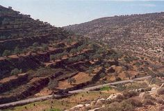 According to author Robert D. Miller, archaeological surveys and excavations of the central hill country have provided a much clearer picture of daily life in ancient Israel during the time of the Biblical Judges and the early Israelite settlers of Canaan.