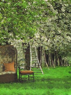 Orchards Love the setting with the flowering fruit trees, ladders & the sedan chair. photo by Lucinda Lambton World of Interiors, World Of Interiors, Amazing Gardens, Beautiful Gardens, The Secret Garden, Vintage Ladder, Vintage Wood, The Ranch, Fruit Trees, Dream Garden