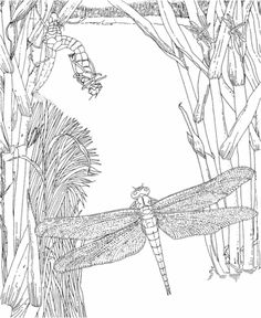 Detailed Coloring Pages For Adults Dragonfly And Fairy Coloring - dragonfly pictures coloring pages