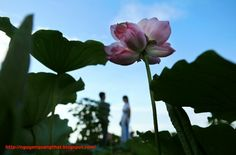 June must be Lotus. It comes and together brings special senses when you melt your soul into thousands of that noble flower. Let get up early with locals to catch actions of sailing bamboo boats and picking lotus flowers up around West lake in Hanoi!