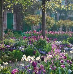 Ravishing spring display at Monet's garden at Giverny, Normandy.