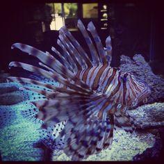Interesting fish