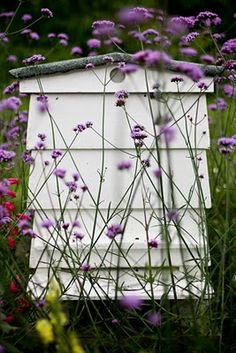 WBC Hive & Verbena bonariensis - bees love it. I started this with 1packet of seeds years ago and it reseeds & comes back every year.<3