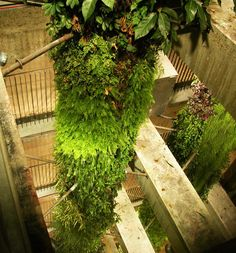 Ternes Parking, Paris | Vertical Garden Patrick Blanc Now that's a vertical garden!!!