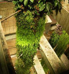 Ternes Parking, Paris | Vertical Garden Patrick Blanc Now that's a vertical garden!!!