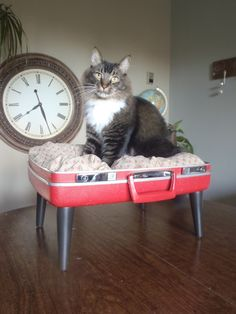 loveable luggage pet bed