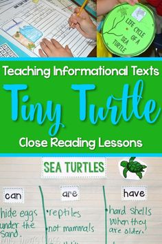 Nonfiction lesson ideas for One Tiny Turtle by Nicola Davies. Turtle life cycle and responding to literature is also included!
