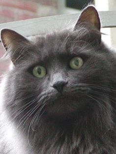 FreebieCat's Cat of The Day September 8, 2015 http://www.freebiecat.com/cat-of-the-day.php