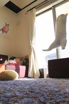 瀬戸にゃん ちさ@無重力 猫ミルコのお家(@ccchisa76)さん | Twitter