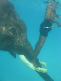 Rajan the elephant's mahout riding his tusks in the Andaman Sea. Irina Shayk, Countries Of The World, Incredible India, Elephant, The Incredibles, Culture, Sea, Animals, Beautiful