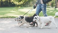 Buy Canine Behaviour Training Online Course for just £29.00 Find out the bite behind the bark with the Canine Behaviour Training Course      Learn about how dogs behave and why and how to communicate with them      Study 12 units covering everything from history to health and discipline      Learn about the different breeds and senses of a dog      Please refer to 'Full Details' for list of...