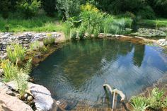 natural swimming pool, the outer ring of plants filters the water, no need for chemicals!