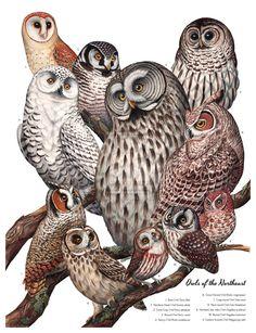 Owls of the Northeast by JadaFitch @ deviantART