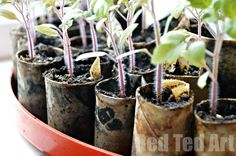 "Super simple DIY seedling pots to ""make"" at in the classroom - thrifty and fun and a great way to get the kids growing and teaching them about recycling. Click through for more thrifty and upcycled garden craft ideas."