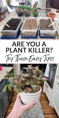 Wondering how to decorate with indoor plants when you have a tendency to not keep plants alive? Try these tips from a former black thumb who now has houseplants in almost every room! How to Decorate w Outdoor Landscaping, Outdoor Plants, Garden Plants, Outdoor Gardens, Vegetable Garden, Easy House Plants, Porch Plants, Indoor Flowering Plants, House Plants Decor