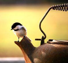 Oiseau sur la théière