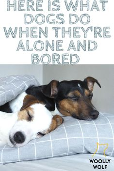 Here is what dogs do when they're alone and bored. Plus 4 Tips on How to Help them. Sleeping puppies, barking, chewing, digging, dogs. Dog training and DIY dog tips.