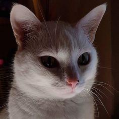 Tak wygląda Marcelina nocą ;) #weeklyfluff #caturday #catsofinstagram #kittiesofinstagram #cat #kot #wieczorowapora #noc #evening