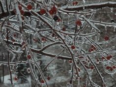 Ice storm Christmas Eve 2009 by T'ai Li, via Flickr