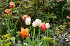 Mon jardin en mai 2013