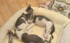 Check out the newest arrivals on the Kitten Rescue Cam!
