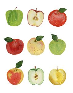 Apples apple fall harvest types varieties caramel green granny smith red delicious gala honeycrisp yellow pink lady pearl sour pie food illustration gouache watercolor painting art print etsy