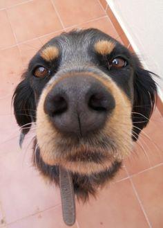 Resultado de imagen para trompas de perros