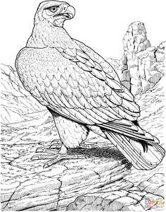 Eagle Coloring Page From Category Select 30423 Printable Crafts Of Cartoons Nature Animals Bible And Many More