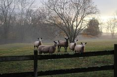 Sheep Instant Digital Download Photo Photography Blue Faced